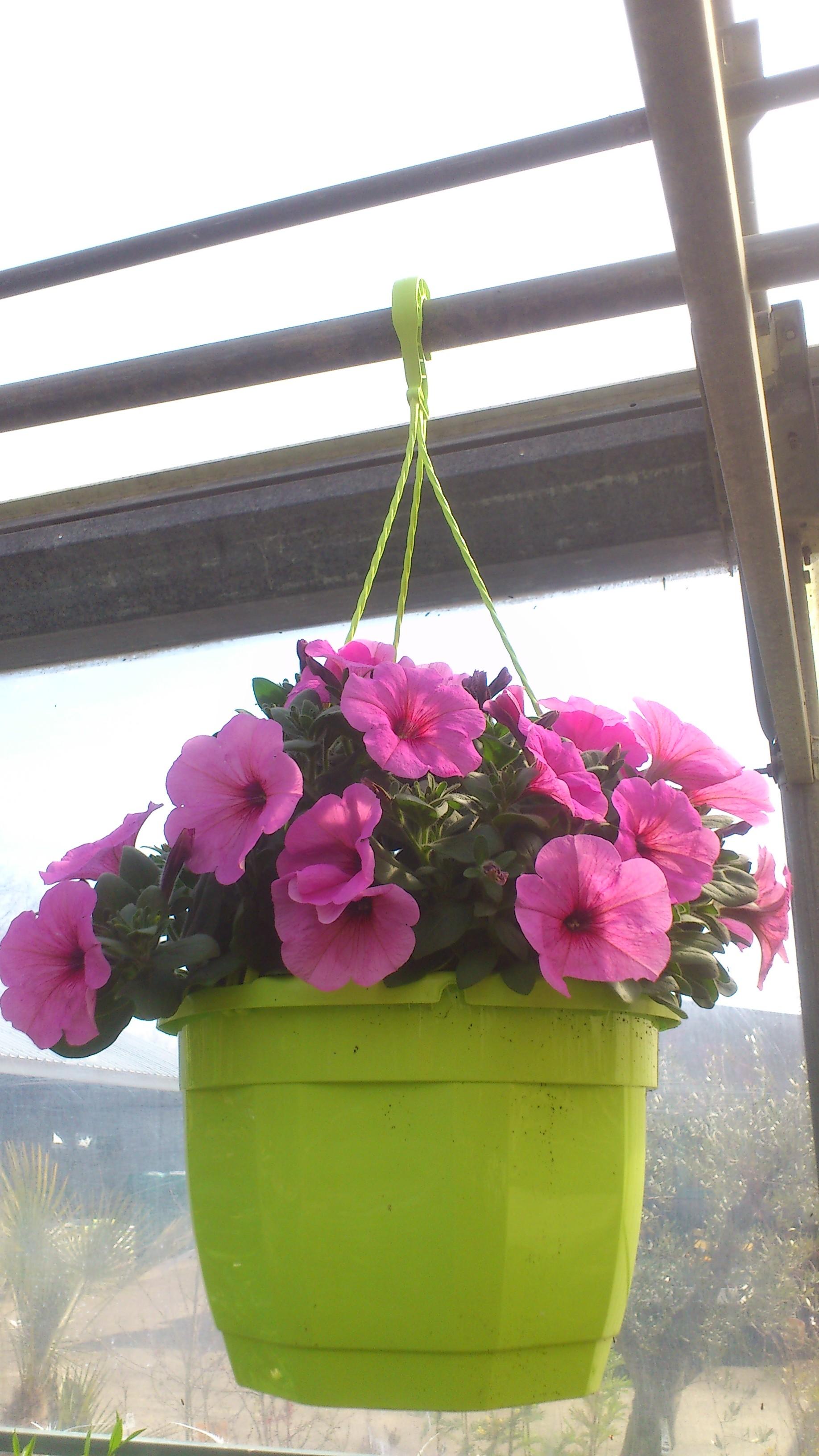 suspensions de fleurs jardinerie p pini re 31270 villeneuve tolosane. Black Bedroom Furniture Sets. Home Design Ideas
